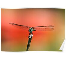 Dragonfly in The Garden Poster