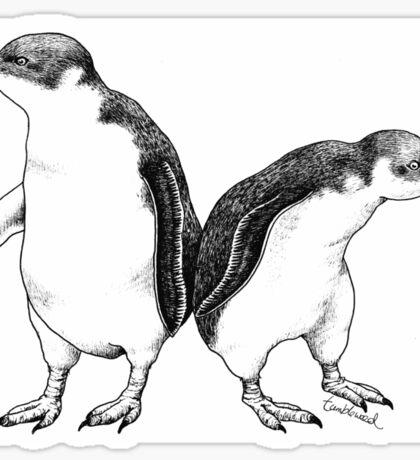 Little Blue Penguins - smallest penguin in the world! Sticker