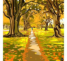 Hagley Park Walk Photographic Print