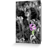 Selectively Purple Greeting Card