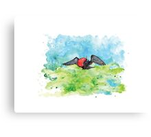 Frigate bird in watercolour Canvas Print