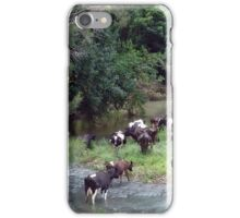 cows in the creek iPhone Case/Skin