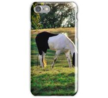 Evening Pinto iPhone Case/Skin