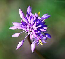 Purple Tassel by nadine henley