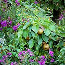 Golden Asian Pears Alongside Orange and Purple Blossoms by TrendleEllwood