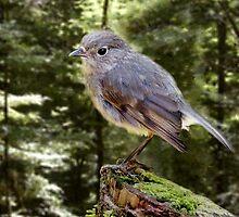 A Little Bird Told Me by Lisa Torma