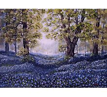 """Mary's Bluebells"" - oil painting Photographic Print"