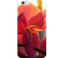 Orchid At Sunset iPhone Case/Skin