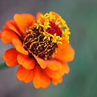 Flower 419 by StonedOgraphy