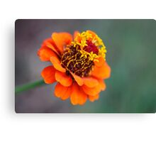 Flower 419 Canvas Print