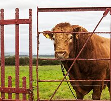He has a bulls notion by Kevin Hayden