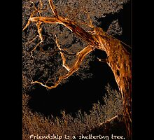 Friendship is a sheltering tree by Lisa Torma