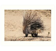 Porcupine and its Quills - African Wildlife Art Print