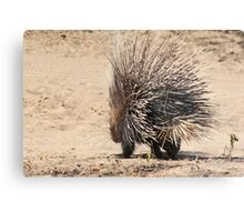 Porcupine and its Quills - African Wildlife Metal Print