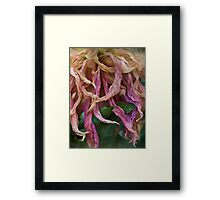 The diva's final aria Framed Print