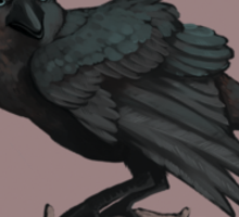 The Three Eyed Crow Sticker