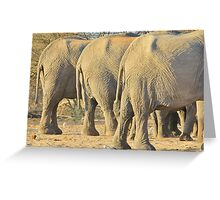 Elephant Diet Clinic - Funny African Wildlife Greeting Card