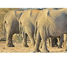 Elephant Diet Clinic - Funny African Wildlife Photographic Print