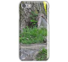 Massive Roots of Towering Tree iPhone Case/Skin