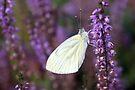 White on Purple by Jo Nijenhuis
