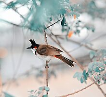 Red-Whiskered Bulbul. Nature in Alien Skin by JennyRainbow