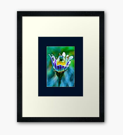 Insect View Framed Print