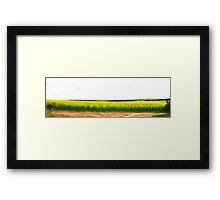 Canola Crop Framed Print