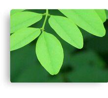 Pleasantly Green Canvas Print