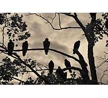 Vultures And Cloudy Sky Photographic Print