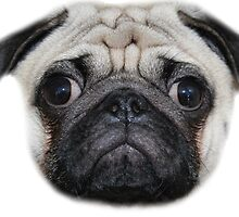 Pug Floating Head by brensuddz