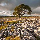 LONE TREE by paula smith
