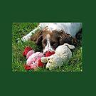 Watching me............Dorset UK by lynn carter
