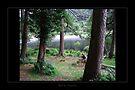 Glendalough - Lake1 by Roberta Angiolani