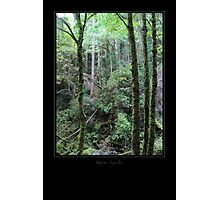Wood of Torc - 5 Photographic Print