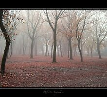 Wood - near Charterhouse of Pavia by Roberta Angiolani
