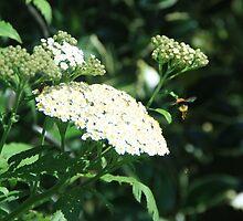 Bee Hovering by Bog-Art