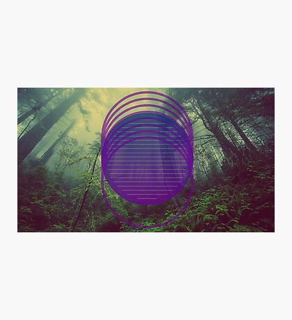 desolate forest  Photographic Print