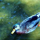 Swimming by marilyn diaz