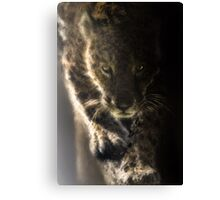 Pat the Cat -Wild Jaguar Canvas Print