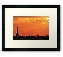 Giraffe - Sunset Gold - African Wildlife and Nature Background Framed Print