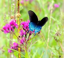 Butterfly Futters on Wildflowers in the Prairie by TrendleEllwood