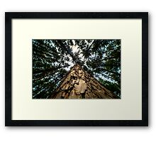 Looking Up at Giants Framed Print