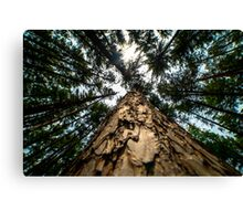 Looking Up at Giants Canvas Print