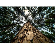 Looking Up at Giants Photographic Print