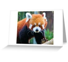Rollie Pollie Greeting Card