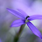 Purple Dreams by AnnieSnel