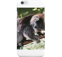 Koala, Victoria, Australia iPhone Case/Skin