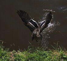 Duck! by turniptowers