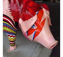 Piggy Stardust Photographic Print