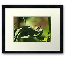 Nomad bee Framed Print